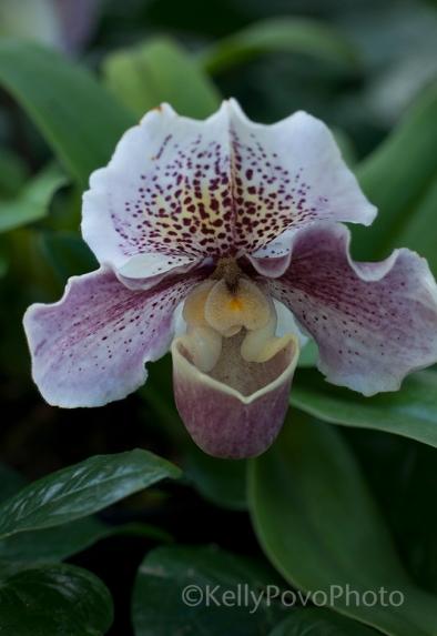 OrchidatComo@72