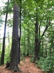 Falls Creek SNA Tall Trees and Ridge Trail