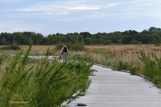 Blaine Wetland Sanctuary Boardwalk
