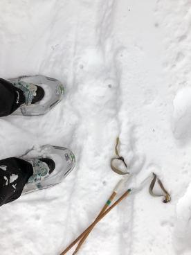 snowshoes_blog